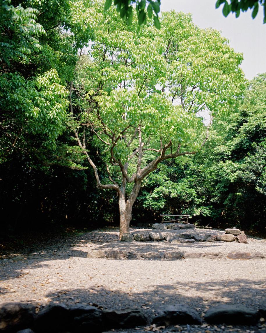 2015GL#16Takamiya Shrine Tree1980Photo 3l9665